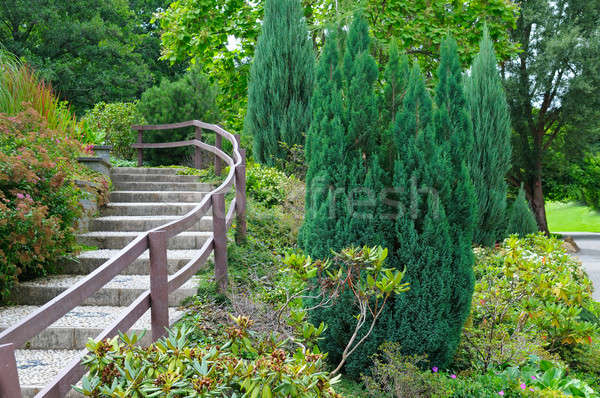 cozy park with stairs and shrubs Stock photo © alinamd