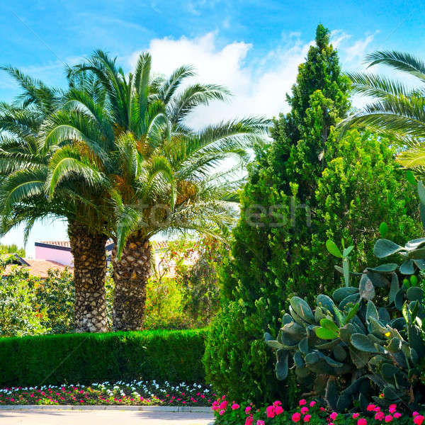 beautiful park with palm trees and evergreen plants Stock photo © alinamd