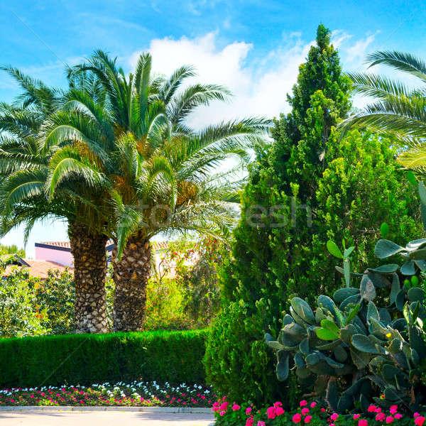 Gyönyörű park pálmafák örökzöld növények égbolt Stock fotó © alinamd