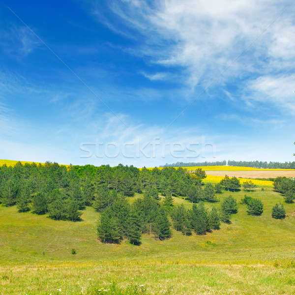 Picturesque rolling fields and spruce forest Stock photo © alinamd