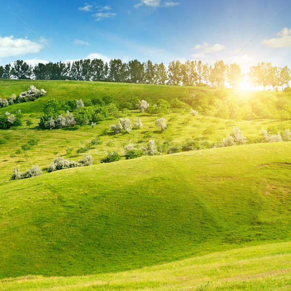Hilly green fields and sun on blue sky Stock photo © alinamd