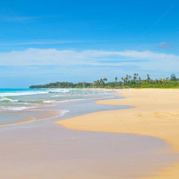 Schönen Ozean lange Sandstrand tropischen Vegetation Stock foto © alinamd