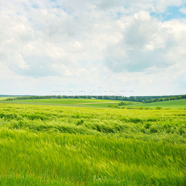 цветения полях облака белый весны трава Сток-фото © alinamd