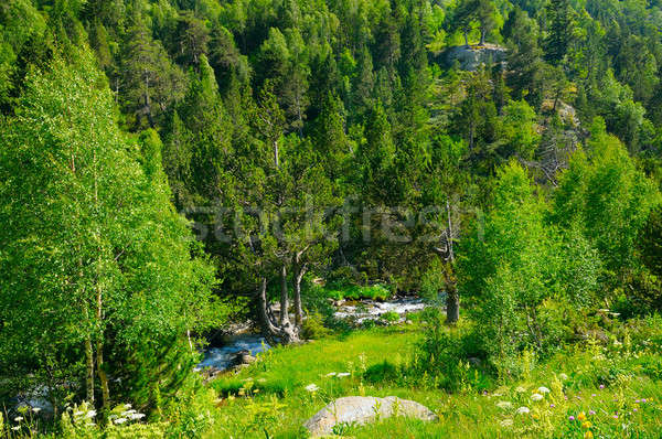 mountain landscape with trees, grasses and creek Stock photo © alinamd