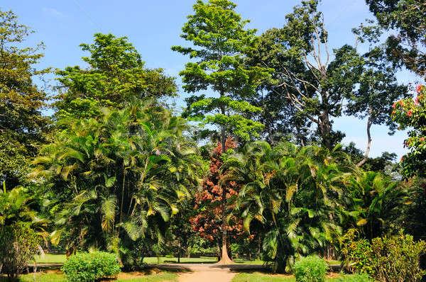 Tropikal palmiye ağaçları şehir park diğer yaprak döken Stok fotoğraf © alinamd