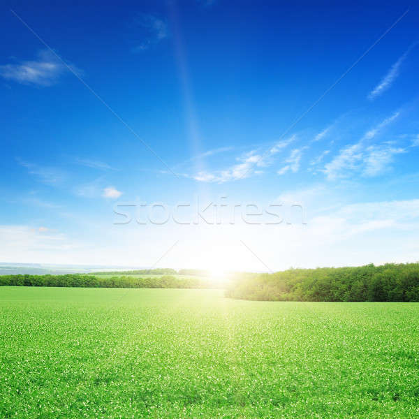 Stock photo: sunrise over a green field