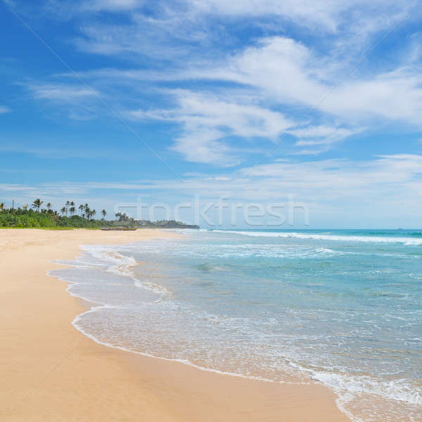 ocean and coconut palms on the shore Stock photo © alinamd