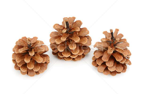 pine cones isolated on white background Stock photo © alinamd
