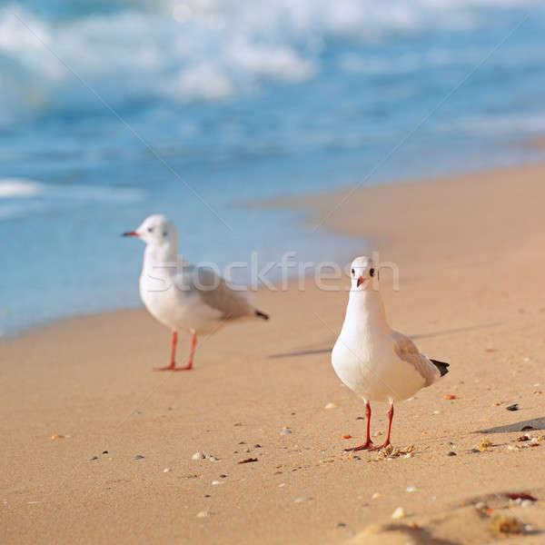 Foto stock: Gaivotas · mar · praia · água · primavera · fundo