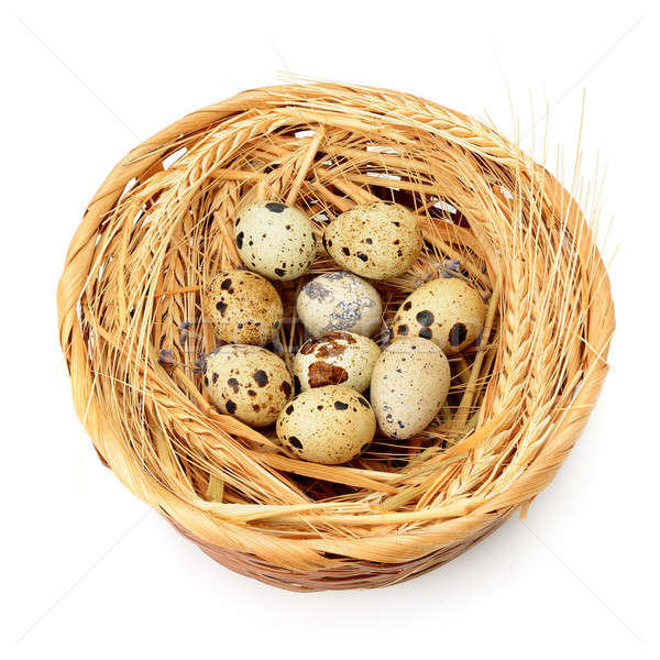 quail eggs in nest isolated on white background Stock photo © alinamd