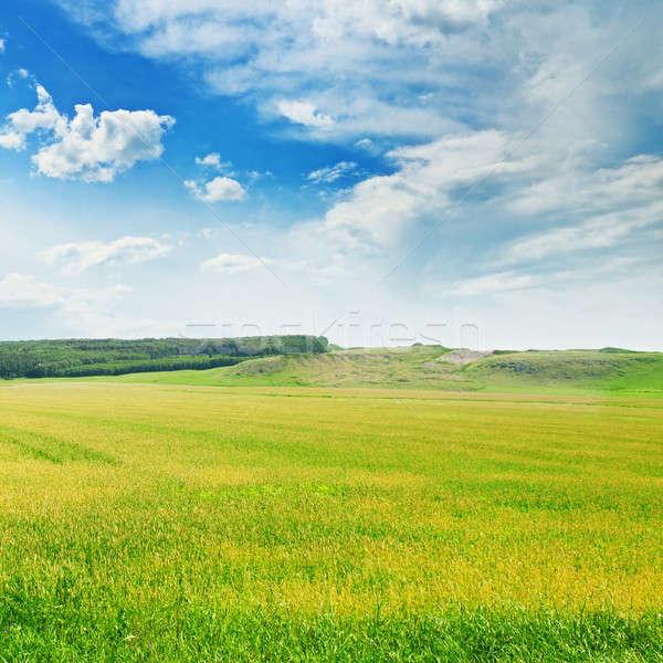 green wheat field and blue cloudy sky Stock photo © alinamd