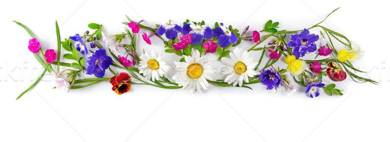 Flower arrangement isolated on white background. Stock photo © alinamd