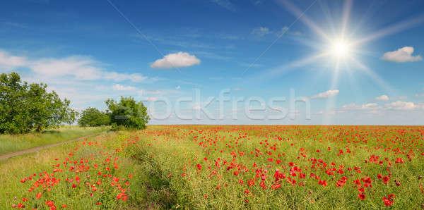 Dziedzinie maki słońce Błękitne niebo niebo krajobraz Zdjęcia stock © alinamd