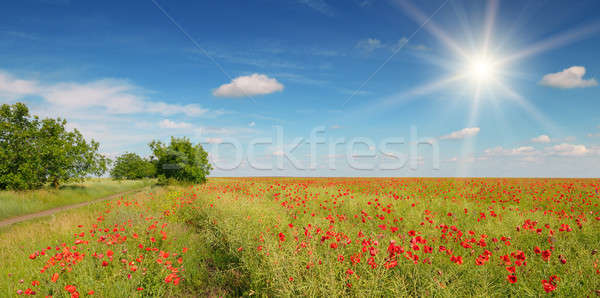 Campo papaveri sole cielo blu cielo panorama Foto d'archivio © alinamd