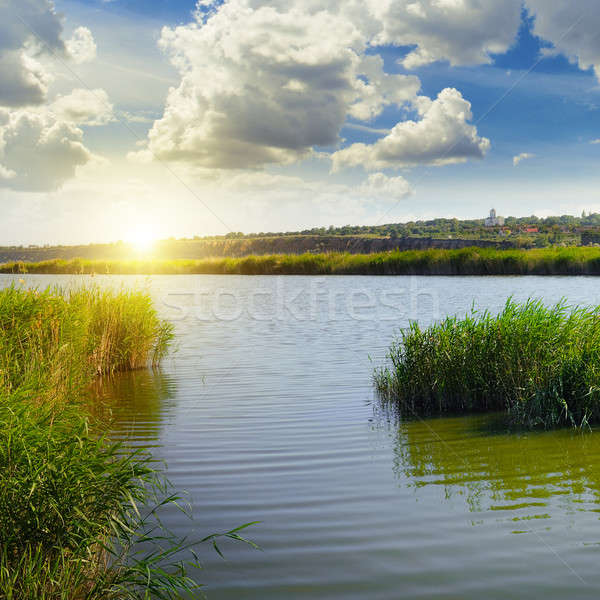 thickets of reeds on the lake and sun Stock photo © alinamd