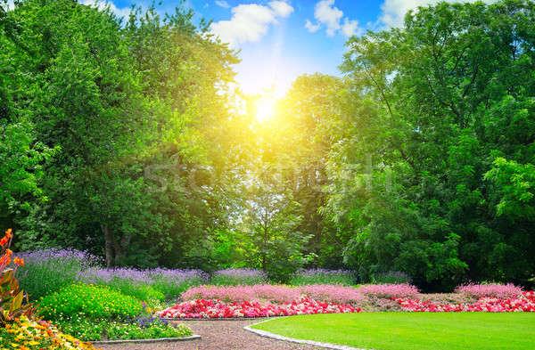 Zomer park mooie hemel gras bos Stockfoto © alinamd
