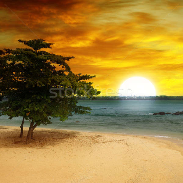 sea beach, a tree and a fantastic sunset Stock photo © alinamd