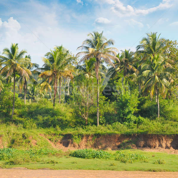 Tropical palm forest on the river bank Stock photo © alinamd
