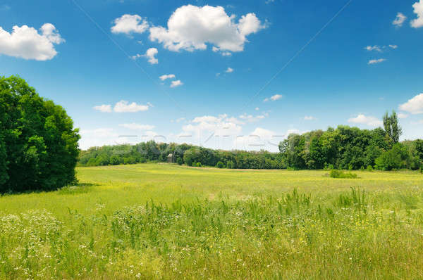 Pittoresque vert domaine ciel bleu arbre nuages Photo stock © alinamd