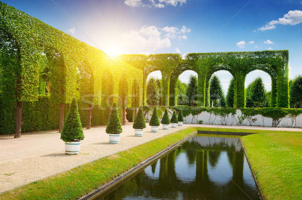 hedge in a summer park Stock photo © alinamd