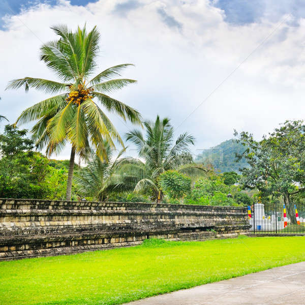 Lawn, coconut trees, cloudy day Stock photo © alinamd