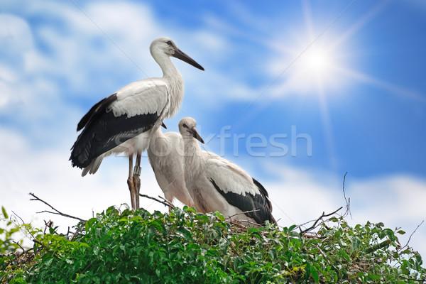 storks on the sky background Stock photo © alinamd