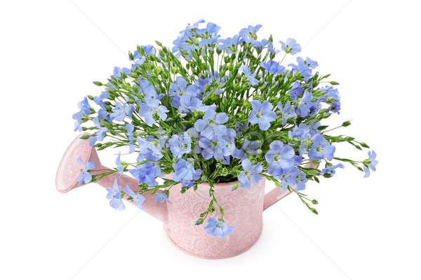 Flores regador isolado branco flor grama Foto stock © alinamd