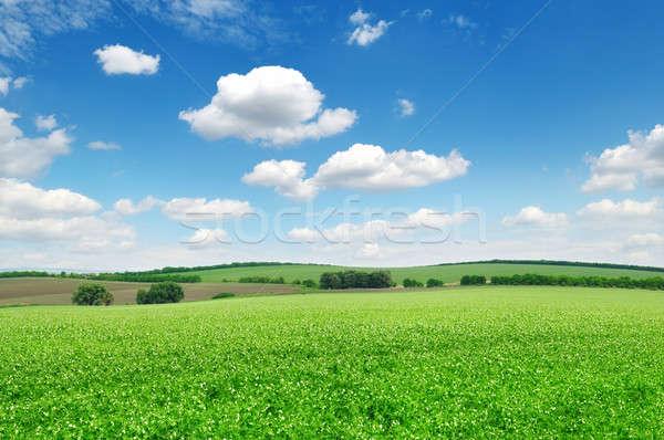 Kwitnienia dziedzinie chmury wiosną trawy słońce Zdjęcia stock © alinamd