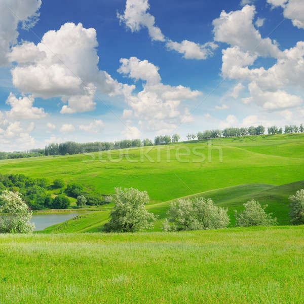Pintoresco verde campo cielo azul primavera forestales Foto stock © alinamd