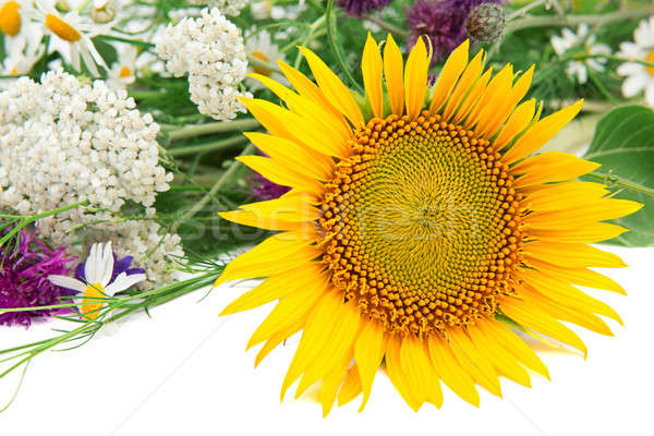 Flower of sunflower and other wildflowers Stock photo © alinamd