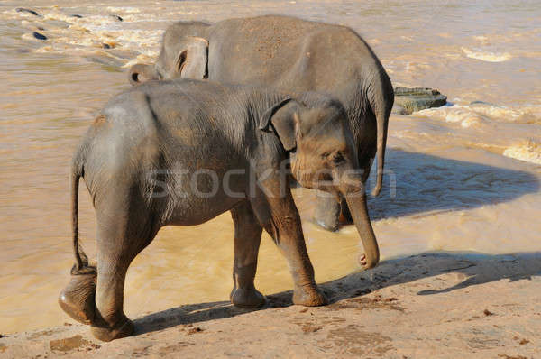 Fil bebek doğa çocuk grup nehir Stok fotoğraf © alinamd