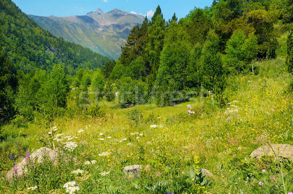 scenic mountains, meadows and blue sky Stock photo © alinamd