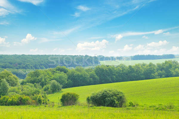 picturesque green field and blue sky Stock photo © alinamd