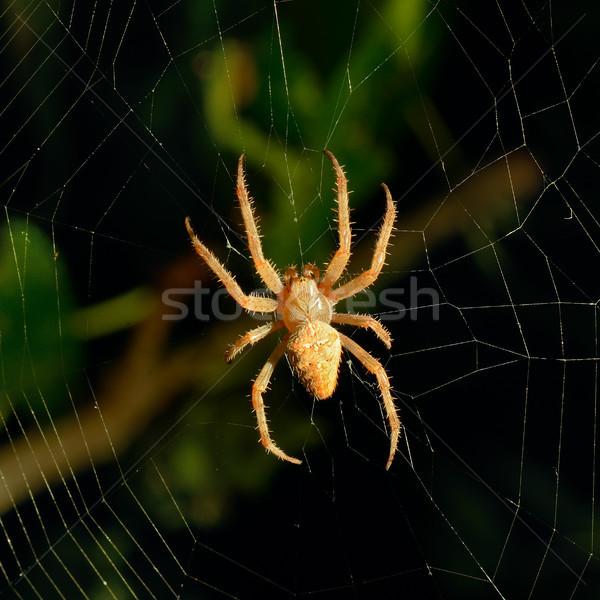 Spinnennetz Nacht gefährlich Licht Kreuz Hintergrund Stock foto © alinamd