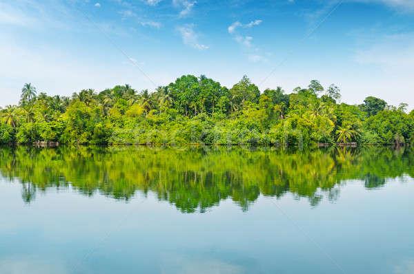 Mangroves and blue sky Stock photo © alinamd