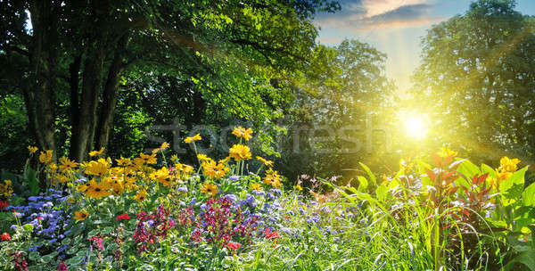 summer park with a beautiful flower bed Stock photo © alinamd
