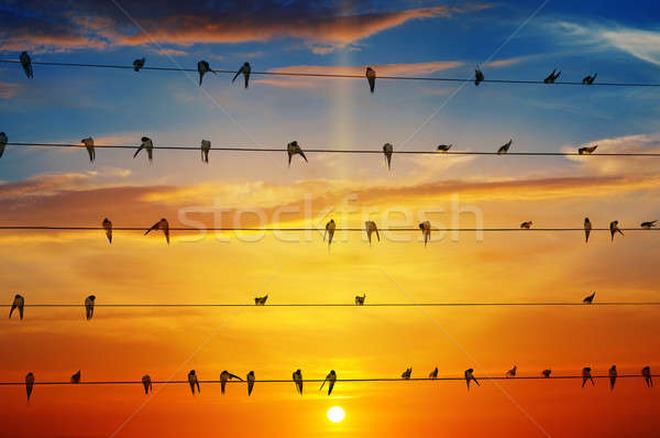 birds on a background of sunrise Stock photo © alinamd