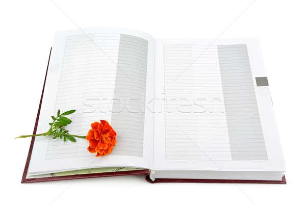 Zdjęcia stock: Książki · kwiat · odizolowany · biały · liści · edukacji
