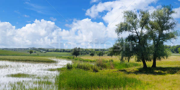 Old lake with aquatic vegetation and picturesque meadows. Stock photo © alinamd
