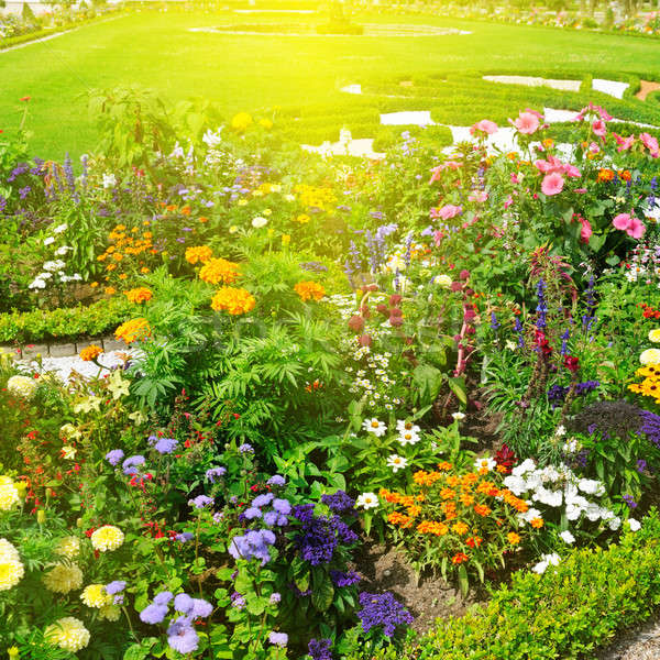 beautiful flower garden and sunrise Stock photo © alinamd