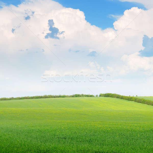 美しい 麦畑 青 曇った 空 雲 ストックフォト © alinamd