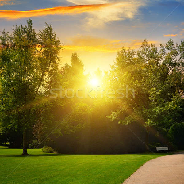Gyönyörű nyár park naplemente tavasz nap Stock fotó © alinamd