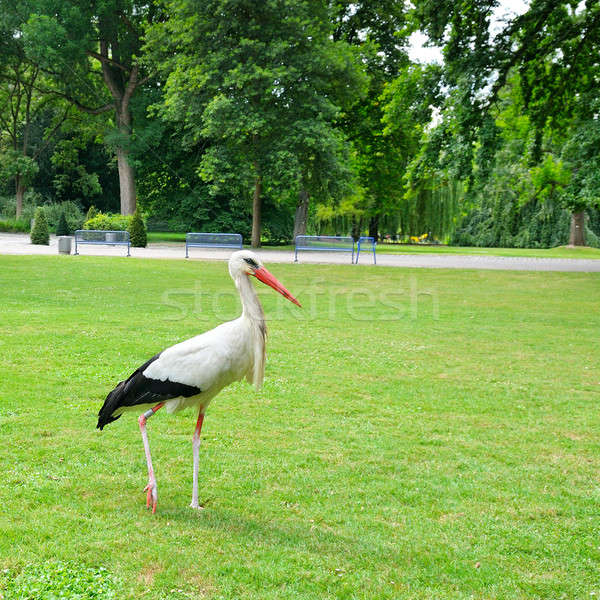 Stork on the meadow in a summer park Stock photo © alinamd