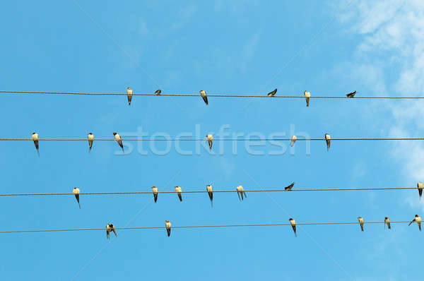 Stock photo: flock of swallows on blue sky background