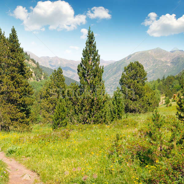 Stock fotó: Festői · hegyek · mezők · kék · ég · felhők · erdő