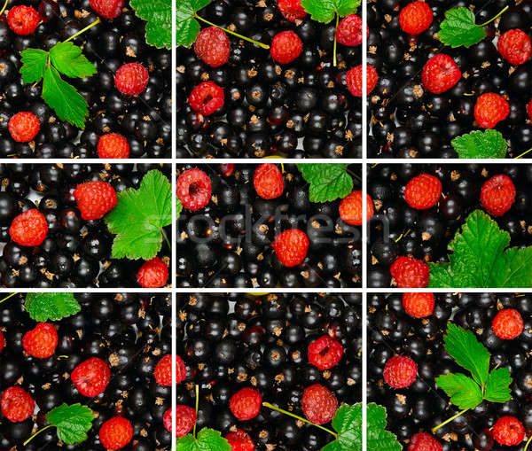 bright background of the berries of black currant, raspberry and Stock photo © alinamd