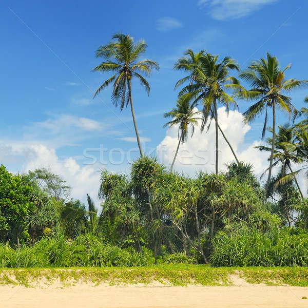 tropical palms on the sandy beach Stock photo © alinamd