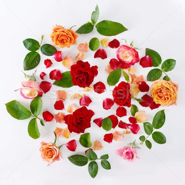 Rosas isolado branco rosa rosas vermelhas topo Foto stock © alinamd