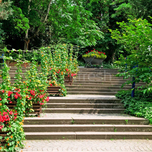 staircase in the cozy park Stock photo © alinamd