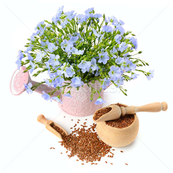 flax seeds and flowers isolated on white background Stock photo © alinamd